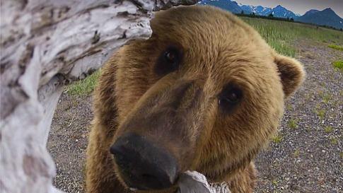 De liefde van een beer
